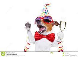 birthday martini white background cheers dog stock images image 29366374