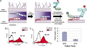Flag Tag Dna Sequence Apex 2 Hybrid A Quantitative Protein U2013protein Interaction Assay