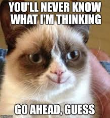 Thinking Cat Meme - thinking of you cat meme binge thinking