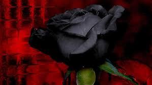 3 techniques to create black flowers florist chronicles