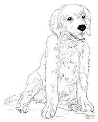 golden retriever puppy coloring page free printable coloring pages