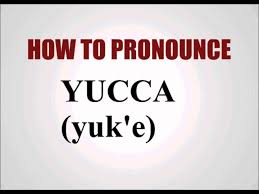 how to pronounce yucca youtube