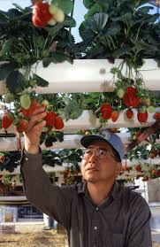 is hydroponic farming organic why should government care cato