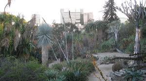 garden 26 in santa monica mildred e mathias botanical garden wikipedia