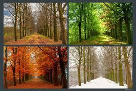 4 seasons 48900f0a 1527 4a45 9eb0 ff9e1e2e8ec9 jpg