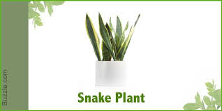 sunlight l for plants dress up your home with these indoor plants that don t need sunlight
