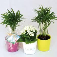 plante d駱olluante bureau mini plante dépolluante 1001 goodies