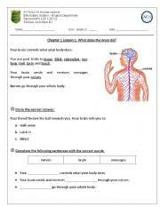 english teaching worksheets do does