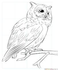 how to draw a realistic owl step by step drawing tutorials