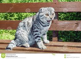 cat sitting on a park bench stock photo image 42407918