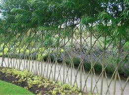 Different Types Of Fencing For Gardens - best 25 living fence ideas on pinterest hedge fence ideas