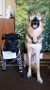 Funny Animal Halloween Costumes 15 German Shepard Halloween Costumes Images