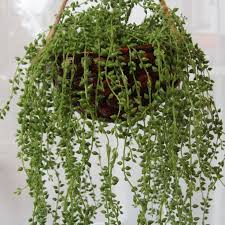 Interior Plant Wall 80 Best Vertical Plant Wall Interior Images On Pinterest Plant