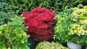 Pflanzen Fur Japanischen Garten Kostenlose Foto Blume Herbst Botanik Garten Strauch