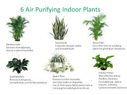 best indoor house plants best indoor house plants according to a study there are plants that