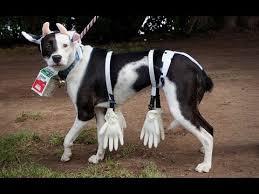 Funny Animal Halloween Costumes Funny Dog Halloween Costumes Ideas Halloween