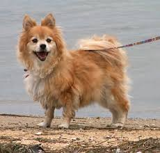 Types Of Dogs Different Types Of Dogs With Pictures Breeds Of Dogs