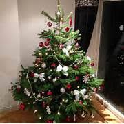 christmas tree seedlings amazing christmas tree decoration
