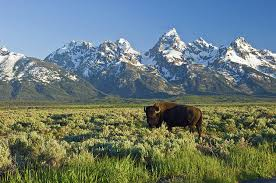 Wyoming natural attractions images 10 top rated tourist attractions in jackson hole planetware jpg