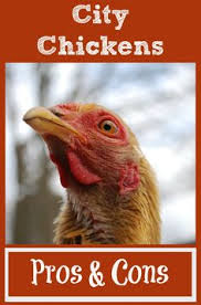 Good Backyard Pets Chicken Breeds Ideal For Backyard Pets And Eggs Popular Back To
