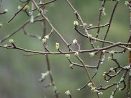 the importance of chill hours for fruit trees what s growing on