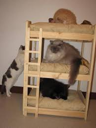 Bunk Bed For Dogs 41 Best Bunk Beds Images On Pinterest Bunk Beds Cat Beds And Cats