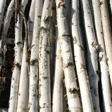 chuppah for sale chuppah birch poles