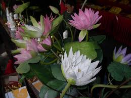 Lotus Flower Parts - 28 lotus flower parts pink lotus flower part of royalty
