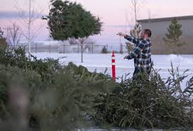 live tree drop continues local news