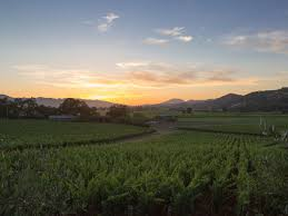 thanksgiving napa the san francisco chronicle launches napa focused wine website