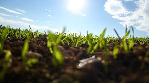 How Long Does Wet Carpet Take To Dry How Long Does It Take Grass To Grow Lawn Love