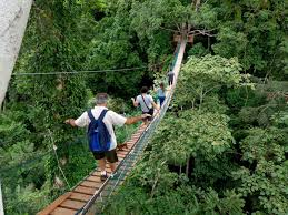 canopy amazon amazon rainforest the amazon rainforest tours 5 days 4nights