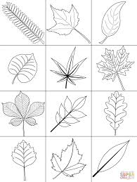 tree coloring pages no leaves kids page palm plants free