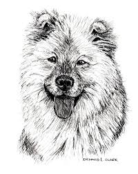 how to draw a long haired dog in pen and ink u2014 online art lessons