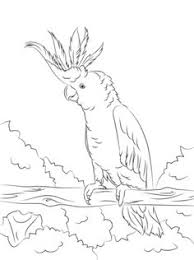 free bird coloring pages bird coloring sheet church