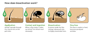 the flea life cycle and how to get rid of them