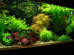 Aquascape Aquarium Plants How To Create Aquascape With Dutch Style Aquascaper