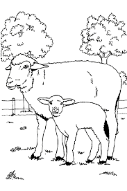 coloring sheep animal coloring pages 8