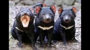 imagenes animales australia 9 animales mas peligrosos de australia youtube