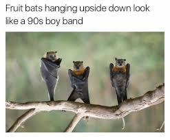 Bat Meme - fruit bats hanging upside down look like a 90s boy band meme on me me