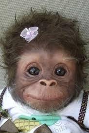 Monkey Face Meme - baby monkey face meme generator