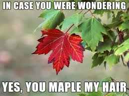 a friend didn t think there were many tree puns to be made