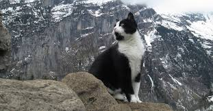 man lost in the mountains greeted by mysterious cat that knew he