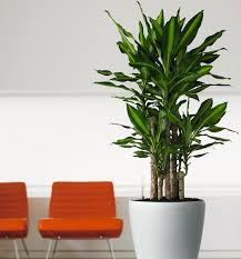 awesome plants for modern homes 34 in home decoration ideas with