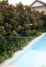 best 25 hedges landscaping ideas on pinterest white gravel