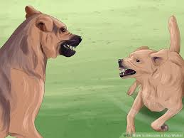 How to Be e a Dog Walker with wikiHow