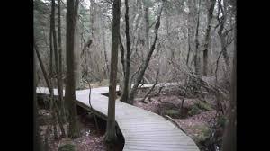 white cedar swamp wellfleet ma youtube