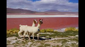 Weirdest Color Names by World U0027s Strangest Lakes Cnn Travel