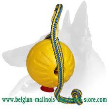belgian shepherd easy to train buy belgian malinois ball
