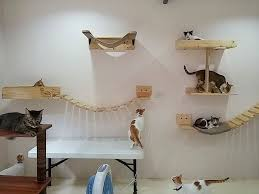 cat wall furniture cara welfare philippines blog archive thanks to kittytektura
